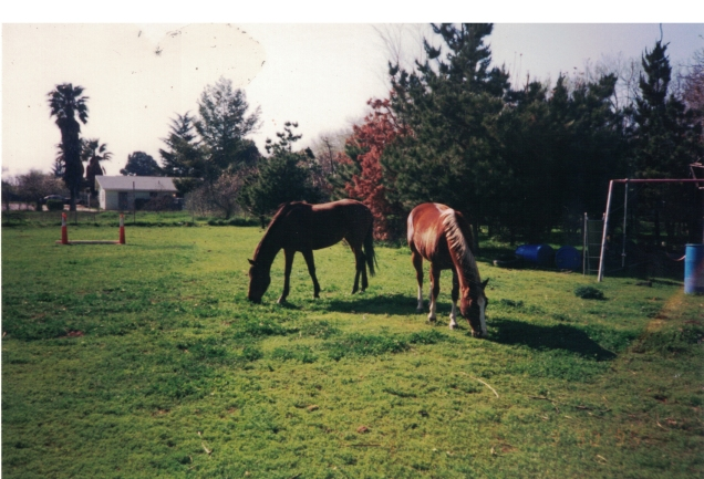 horses high